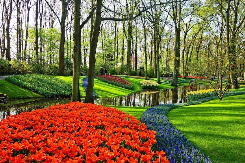 Show item 1 of 7. Private Sightseeing Tour to Keukenhof and the Windmills