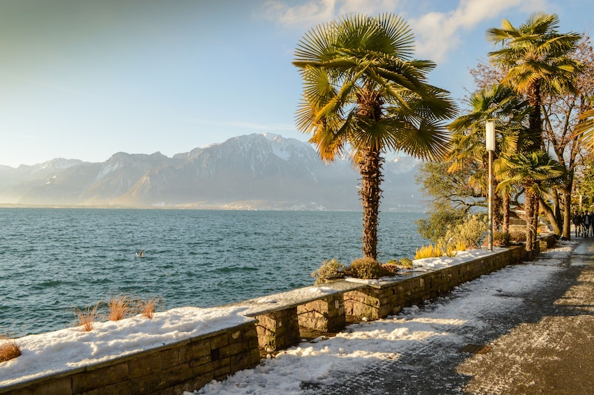 Palm trees along the Swiss Riviera with mountain in the background