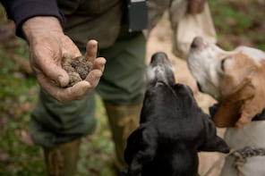 Full Day Discovery Truffle Hunting in Umbria