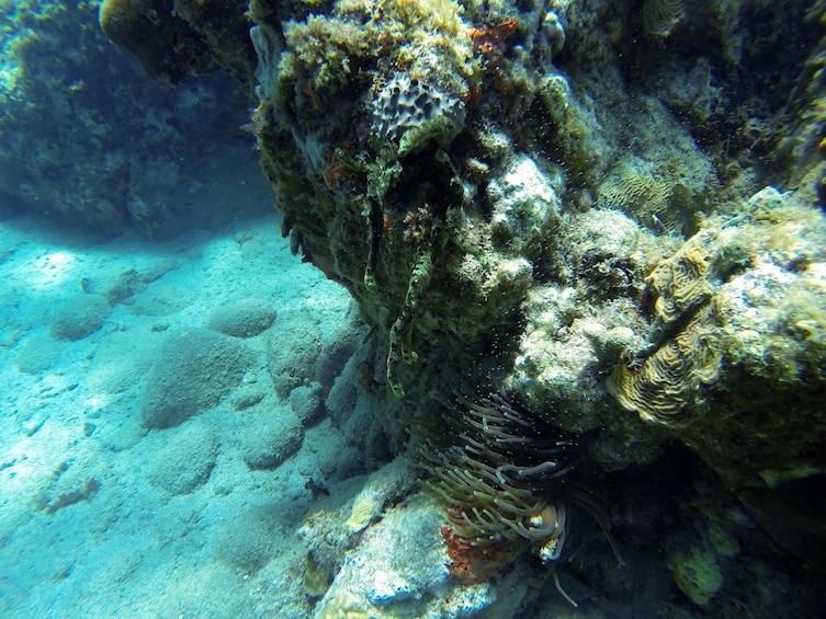 Show item 3 of 7. Caribbean Sea Boat Snorkel Tour