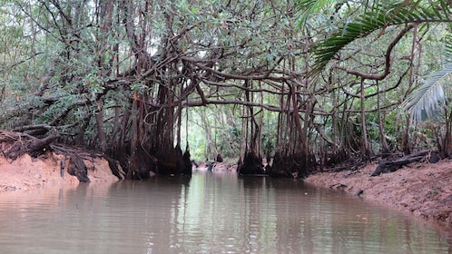 The Lost Zone Amazon & Old Town