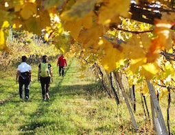 Valpolicella Wine & Food tour from Lake Garda