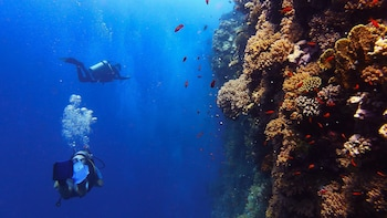 PADI Advanced Course at Menjangan Island