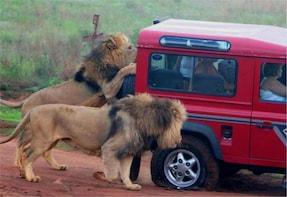 Safari & PheZulu Cultural Village Day Tour from Durban