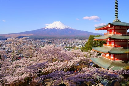 Cherry blossoms and temple in Mt. Nikura Asama Park