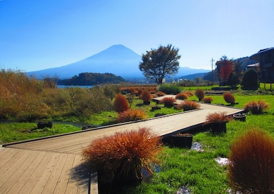 Oishi Park with clear view of Mt. Fuji in the background
