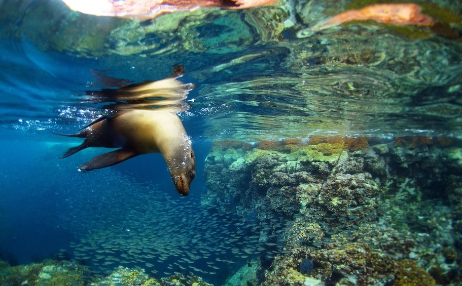 Show item 2 of 7. All-Inclusive Sailing, Snorkeling Remote Beaches & Sea Lions