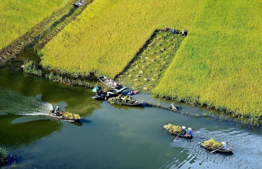 Show item 3 of 10. Rice field along river in Ninh Binh