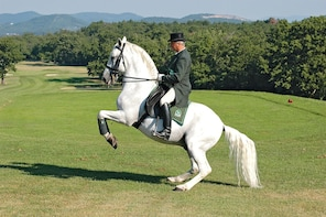 Lipizzaner Stud Farm- Small Group Experience from Trieste