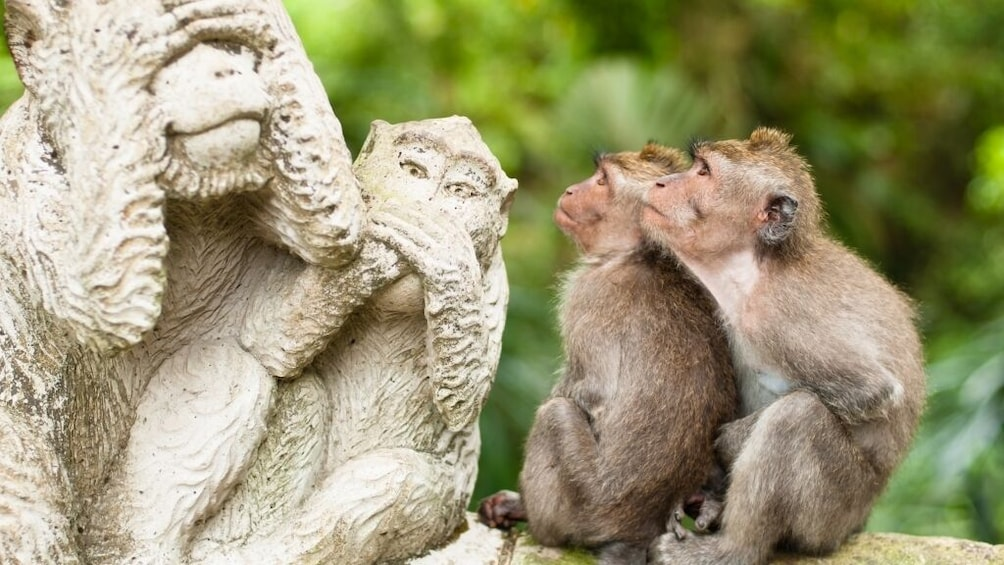 Show item 1 of 10. Best of Ubud: Monkey Forest, Temple, Waterfall and more