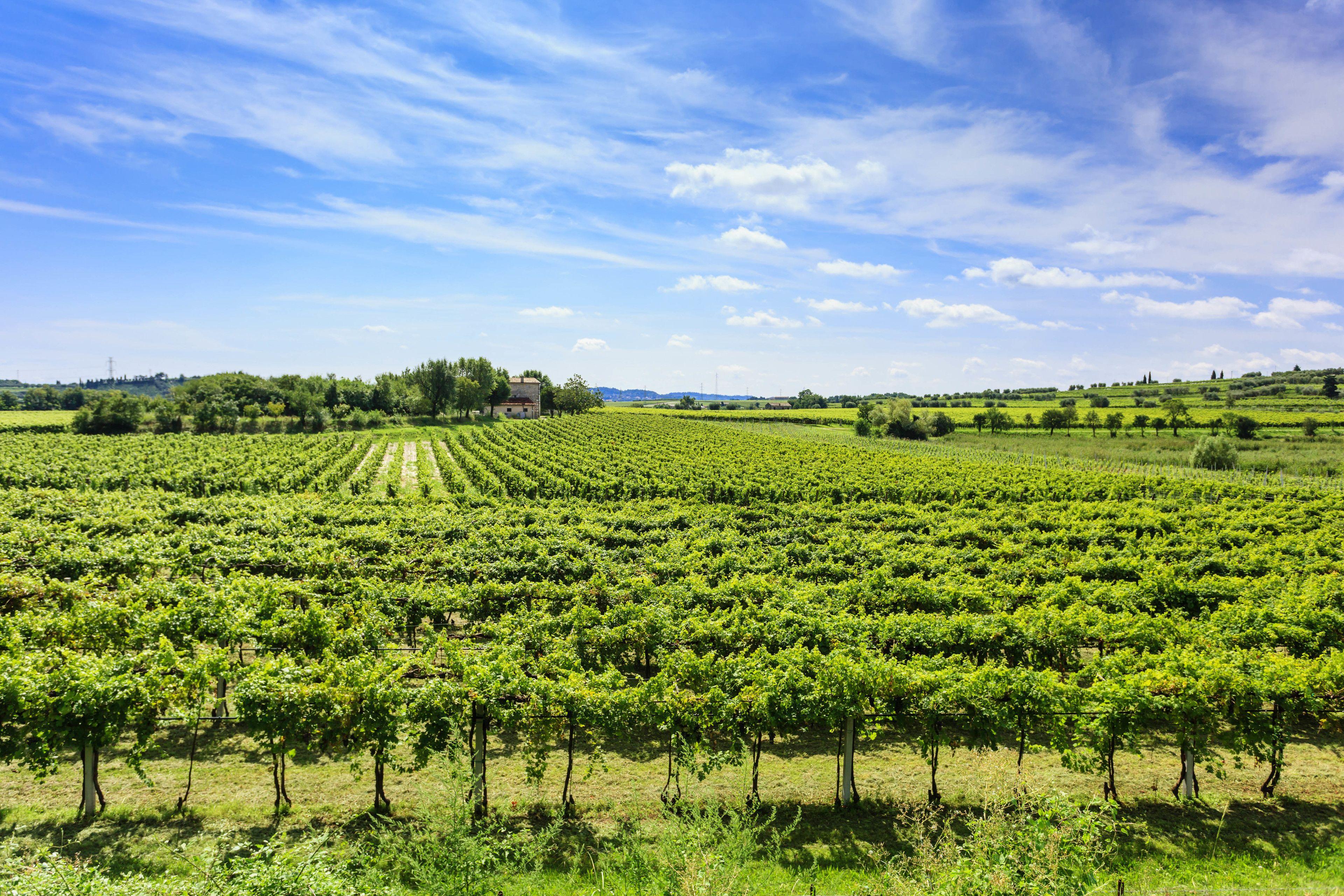 Wine Tour 1: Bardolino & surroundings