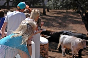 Visit a Bull and Horse Breeding Farm & Ronda Tour