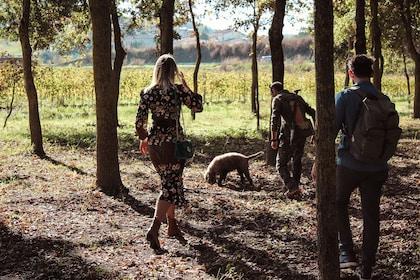 Truffle Hunting & Wine Tasting Experience in San Gimignano