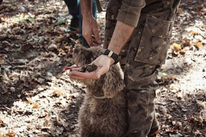 Truffle Hunting & Wine Tasting Experience in San Gimignano