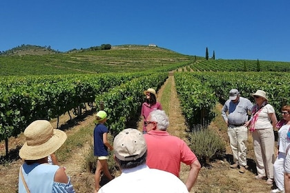 Douro Valley Historical Tour w/ Lunch, Winery Visit & Cruise