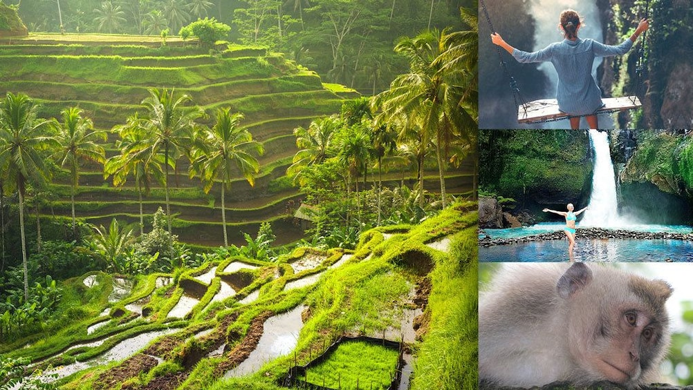 Show item 1 of 9. Full Day Ubud Tour: Culture, Arts show, Waterfall &Rice view