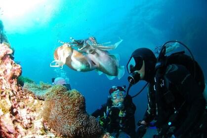 diving-689831_1280.jpg