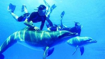 Snorkelling Trip At Satayh Dolphin Reef