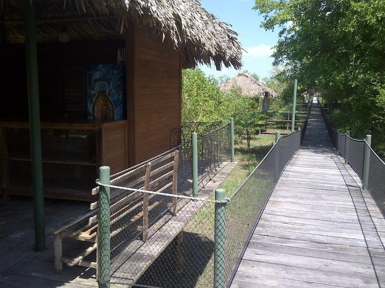 Show item 2 of 6. Boardwalk through Pantanos de Centla in Tabasco, Mexico
