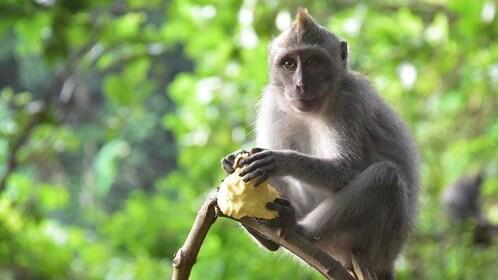 Ubud Monkey Forest Tour.jpg