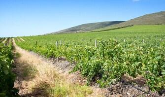 Wine Tour 4 Premium vineyards (All inclusive)
