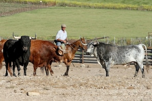 Private Tour: Brave Bull's Ranch & Medina Sidonia from Cádiz