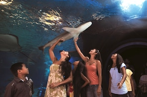 One-Day Maui Ocean Center Aquarium Admission