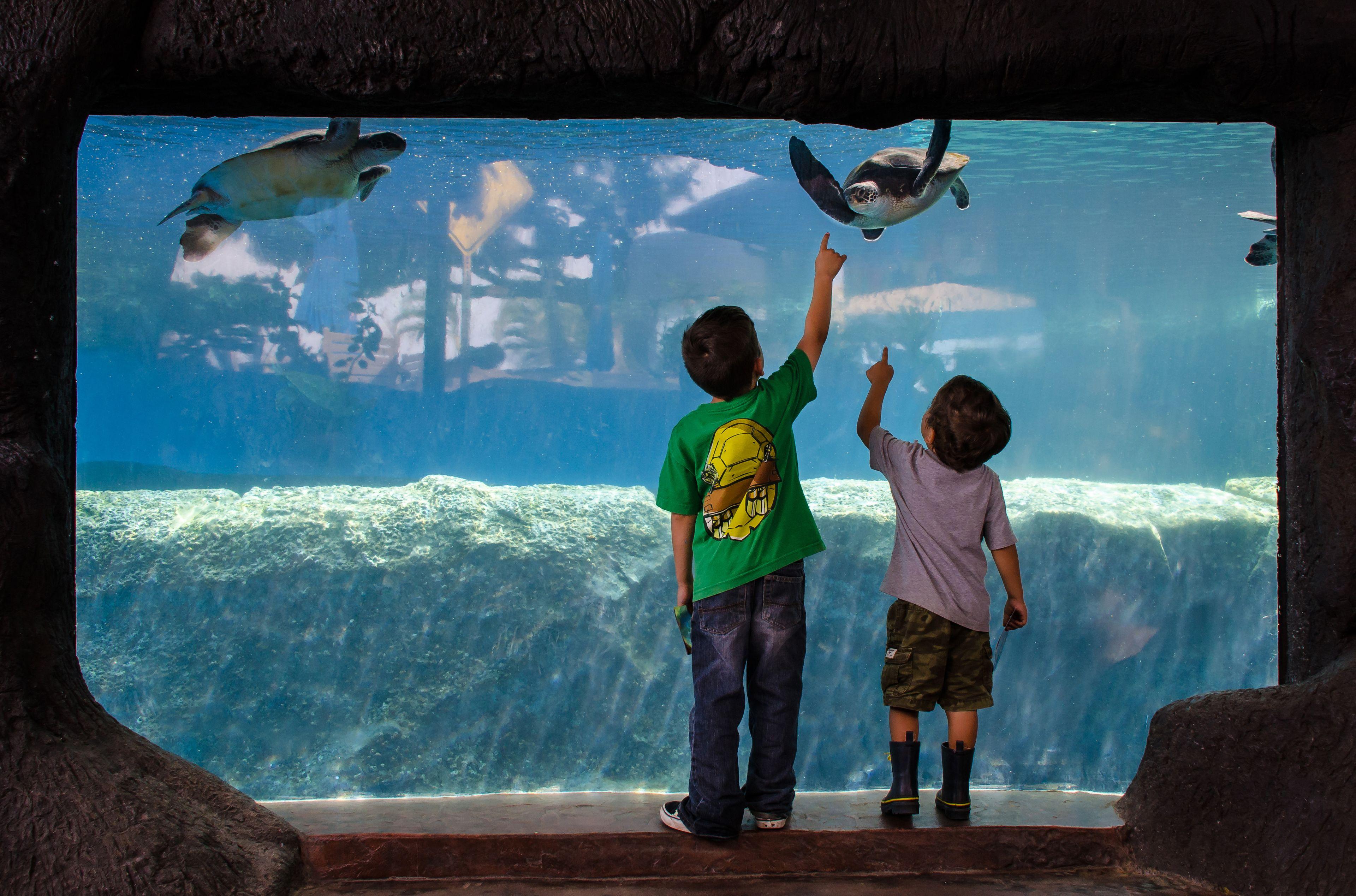 Behind-the-Scenes Tour with Aquarium Admission