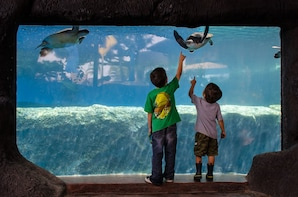Behind-the-Scenes Tour with Aquarium Admission