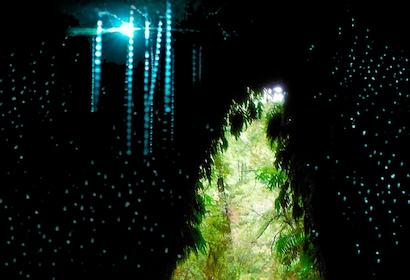 glow-worm-cave-tour-greymouth-west-coast-new-zealand.jpg