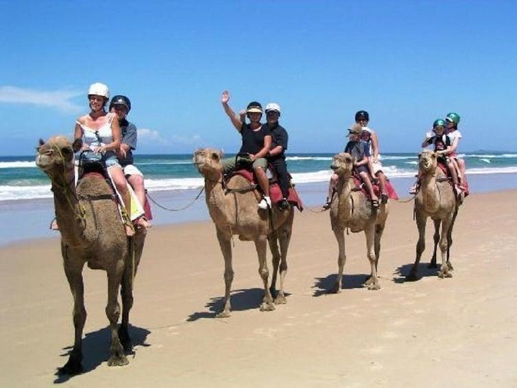 Show item 1 of 3.  Qatar South Coast Tour With Camel Ride