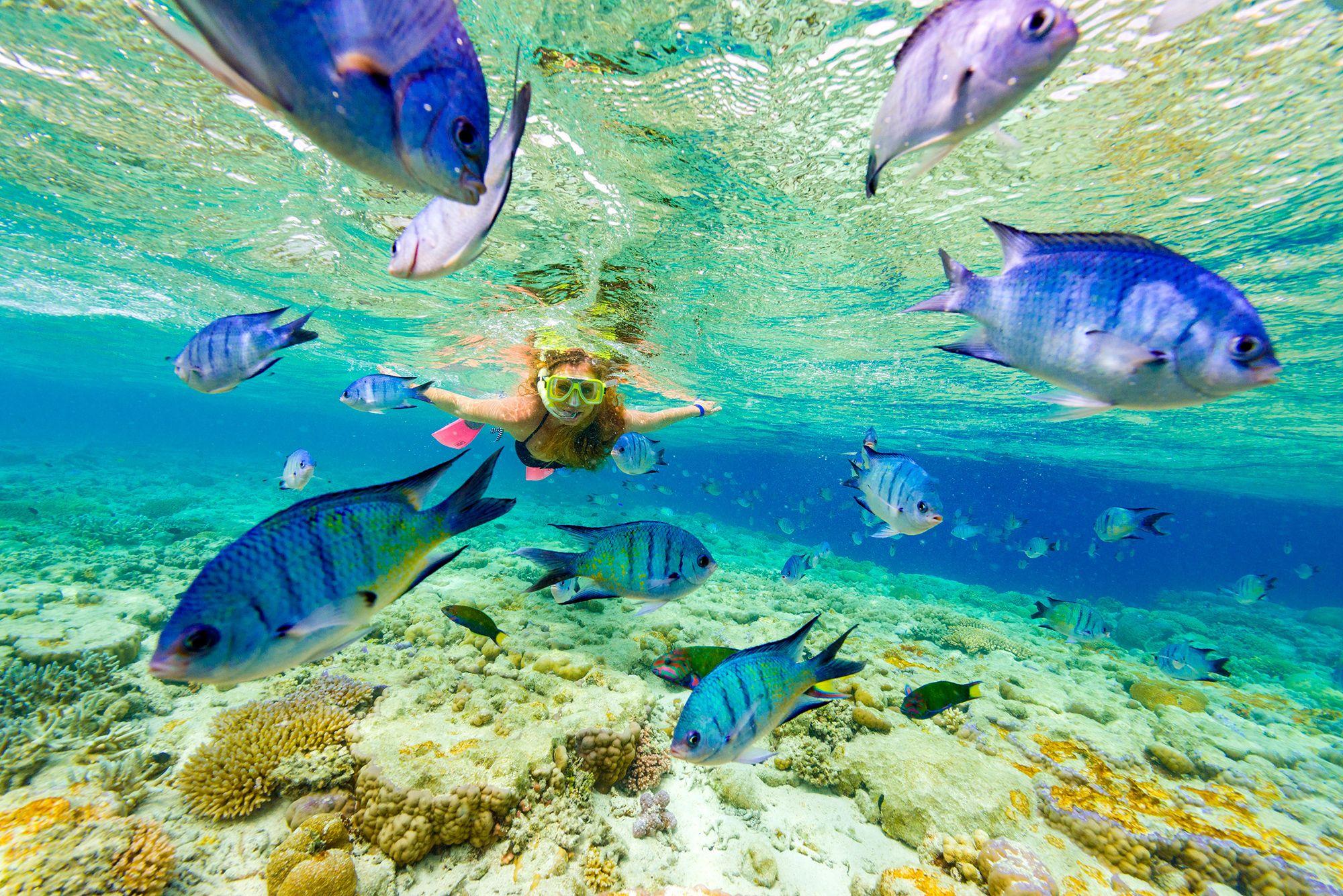 snorkeling promo.jpg