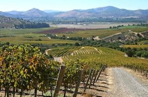 Half Day Trip to Concha y Toro Vineyard from Santiago