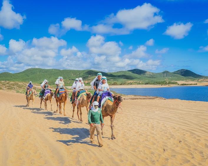 Show item 3 of 10. Camel Ride Adventure in Los Cabos