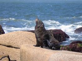 Sea Lions Island Tour