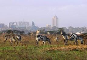 Half Day Nairobi National Park