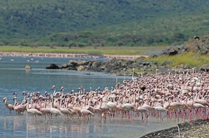 1 DAY Lake Nakuru Guaranteed Daily Depature
