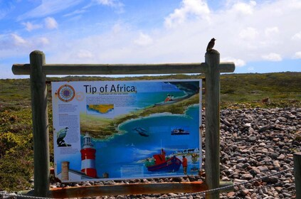 Cape Agulhas Full Day Tour