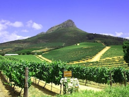 Stellenbosch Half Day Wine Tour
