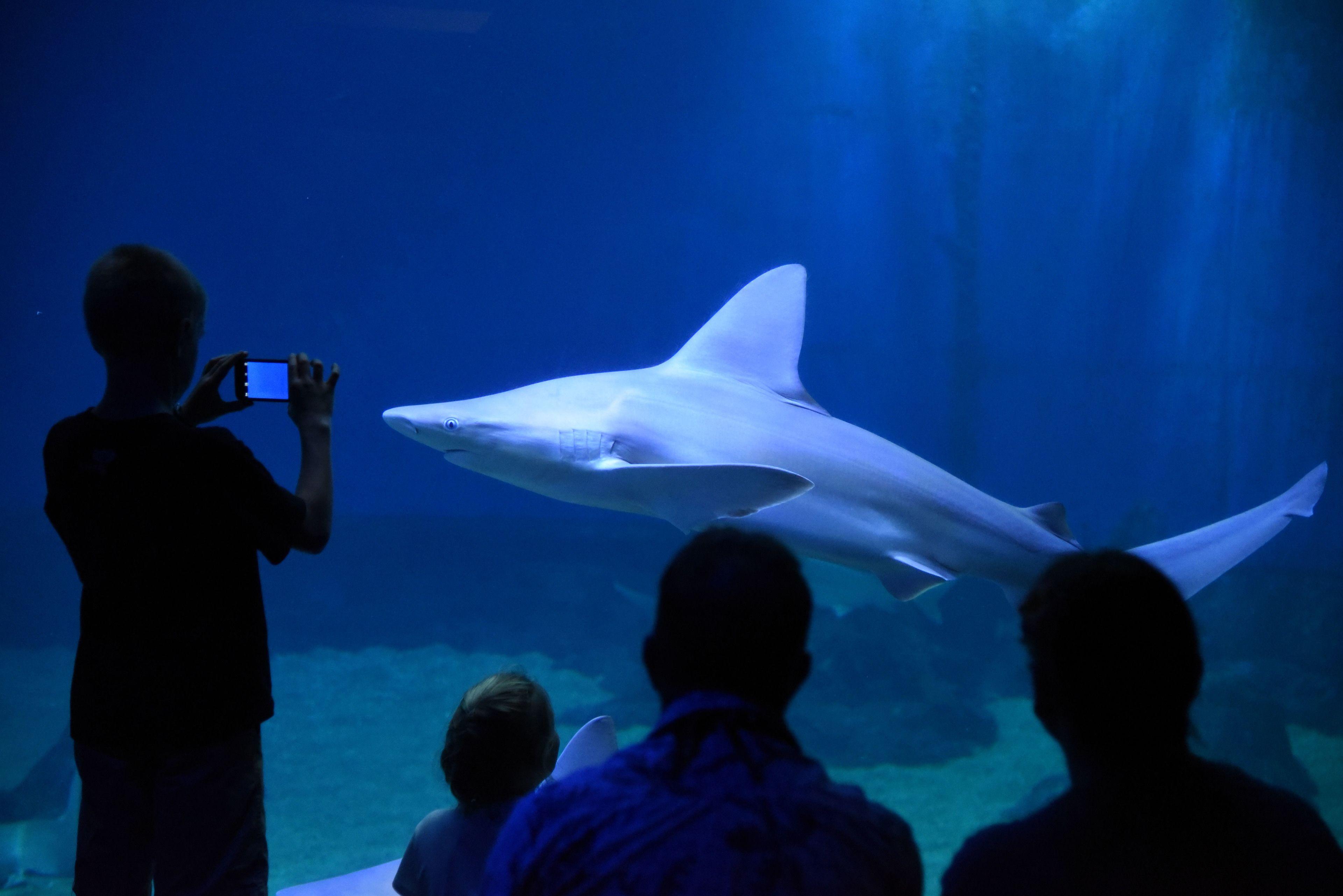 Shark Tank Scuba Dive at Maui Ocean Center Aquarium