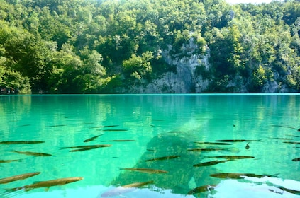 Plitvice Lakes Day Tour Transfer from Zadar