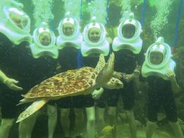 Sea Trek Reef Encounter
