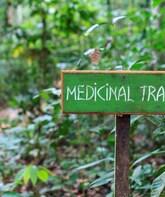 Medicinal Trail guided by a Mayan Shaman