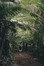 Rainforests & Waterfalls_Credit_Tourism & Events Queensland.jpg