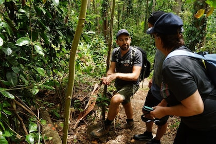 Rainforests & Waterfalls_Kingfisher Circuit 3.JPG