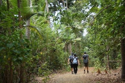 Rainforests & Waterfalls_Conway Circuit 2.JPG