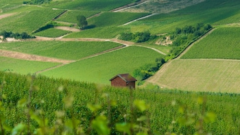 Small Group Burgundy Chablis Day Trip with 3 wineries visit
