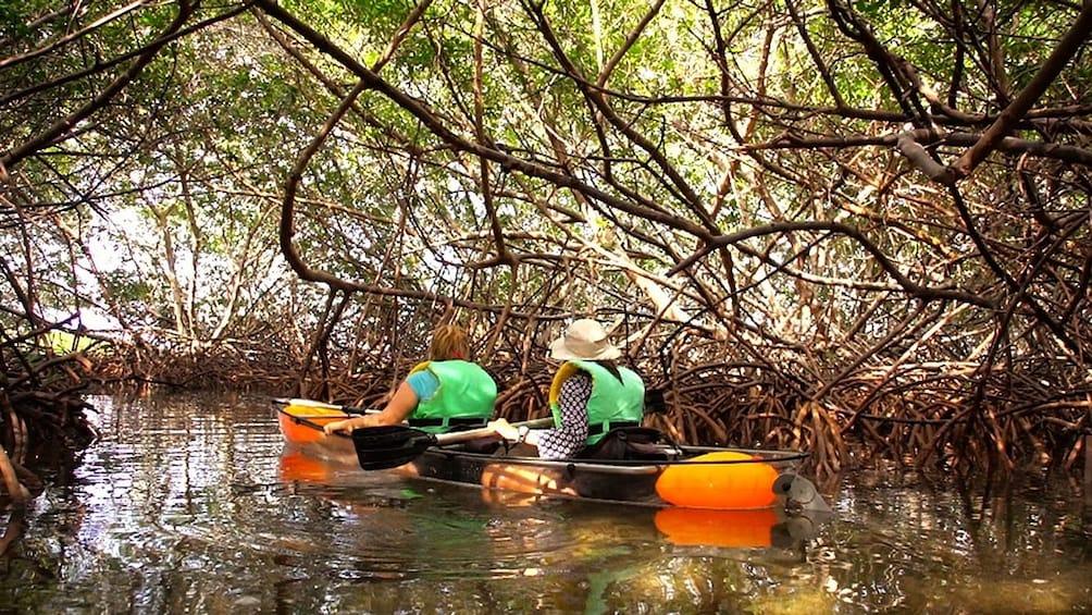 Show item 5 of 5. Transparent Kayak Tour