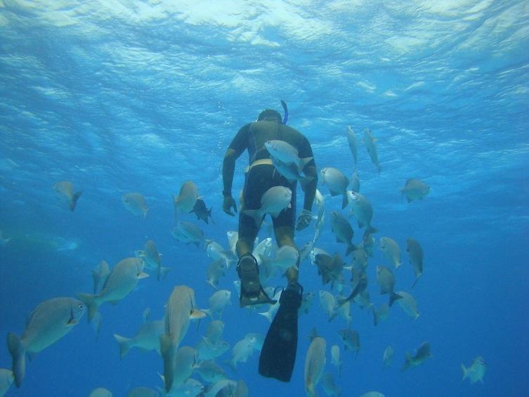 Show item 3 of 4. Manatí Tour in Semi Submarine