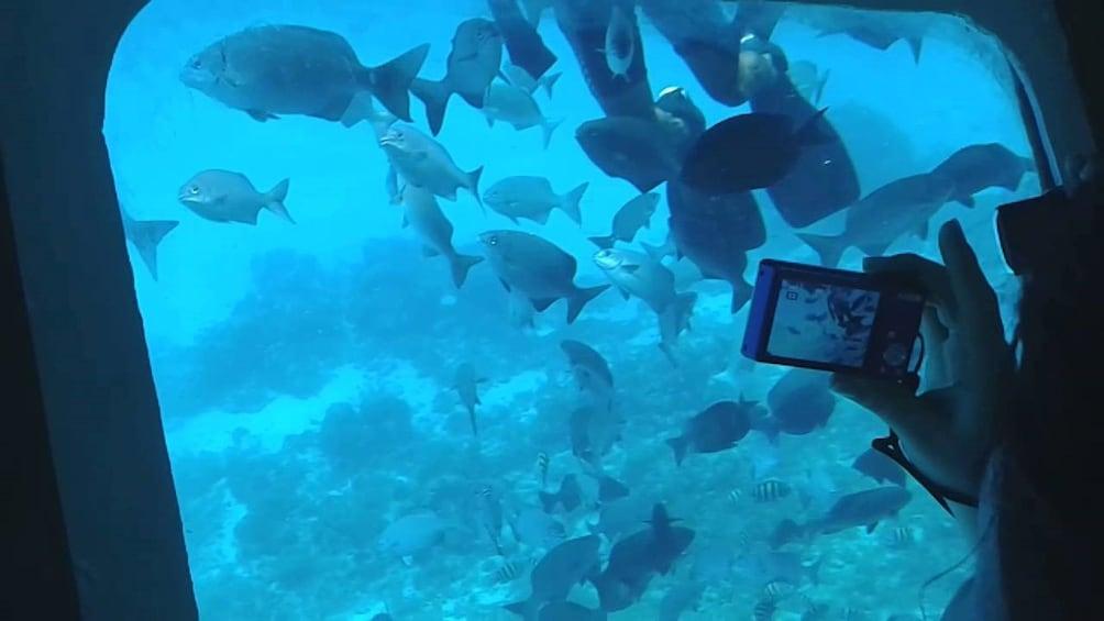 Show item 2 of 4. Manatí Tour in Semi Submarine